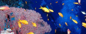 Mer rouge plongee medium