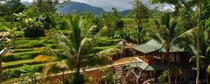 Bali charme medium