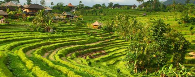 Bali ouv big